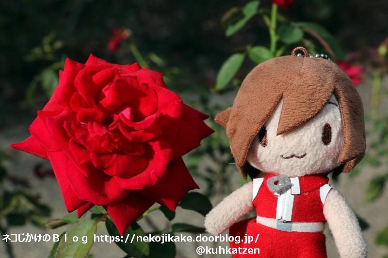 2020091302私にはバラが良く似合う。