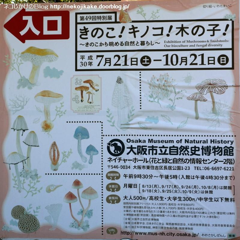 2018102105きのこ!キノコ!木の子!@大阪市立自然史博物館。1