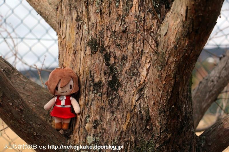 2019021402この木何の木。