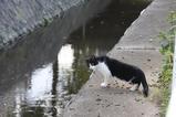 若き白黒ネコの悩み。その2