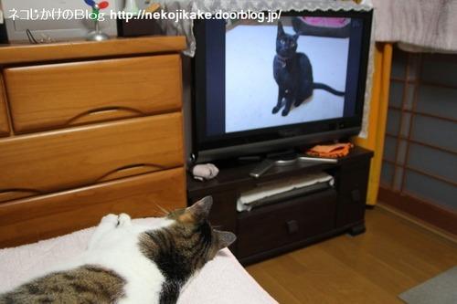2013072601ネコを見るネコ。