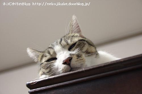 高いところで寝る。