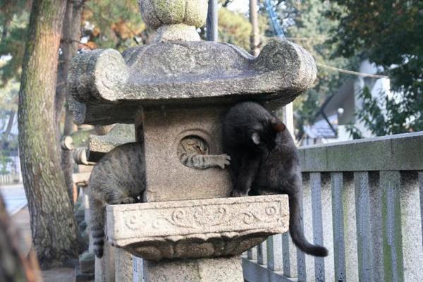 ちょっかい。キジトラ子ネコ、くーちゃん