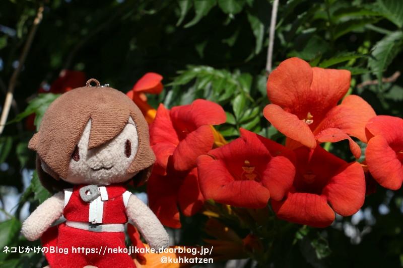 2021061114ノウゼンカズラの花も咲いてます。