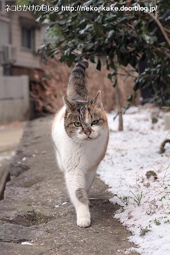 雪を避けて。