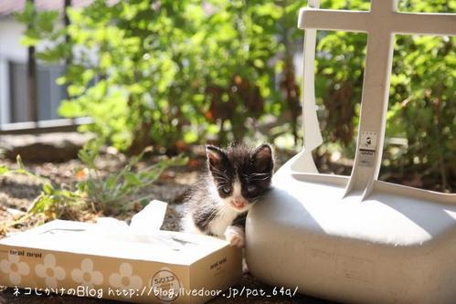 子ネコ祭り。その1 黒白子ネコ