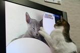 ネコたちの動き。シマ2