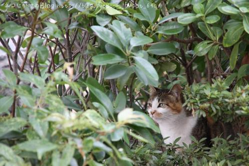 茂みの中から。 三毛ネコ