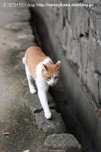石の上をずっと歩けたら願い事がかなうんだ。