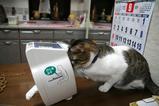 ネコは健康に興味がない?シマ1
