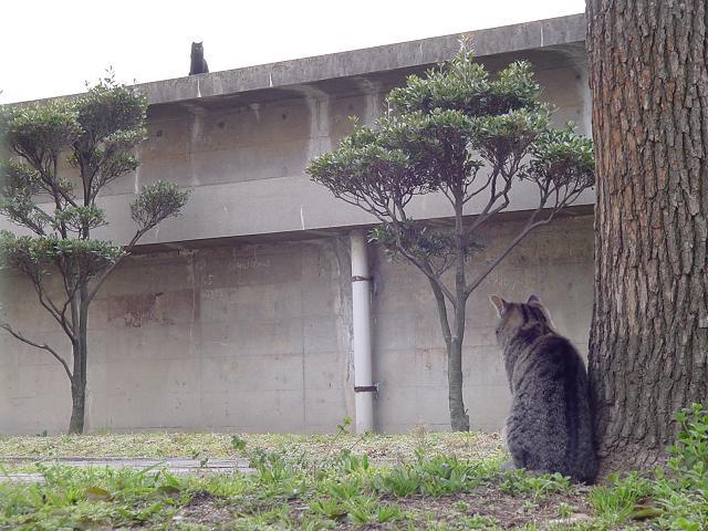 黒ネコを見つめるネコ。