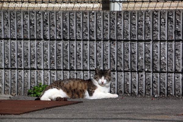 2016041110寝る猫。1