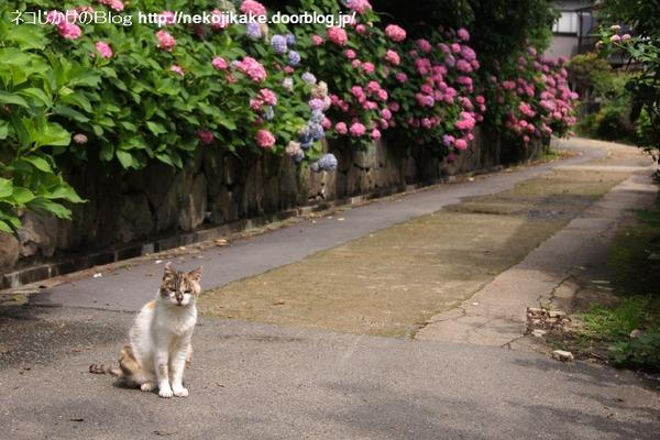2016062214花に猫を添える。2