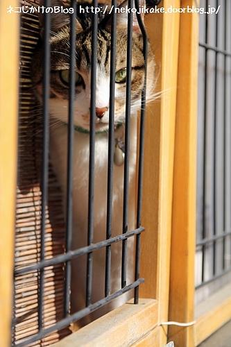 籠のネコ。