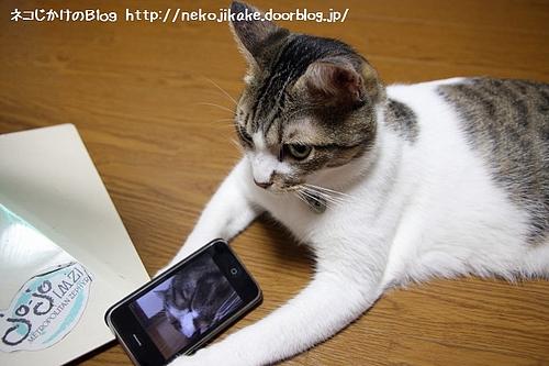 ネコもすなるiPhone。