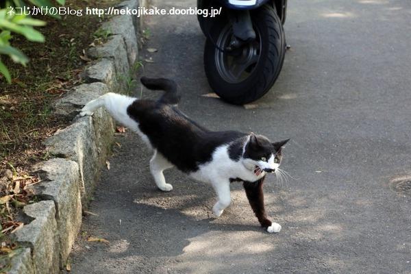 2016051307白黒ネコ三段活用。2