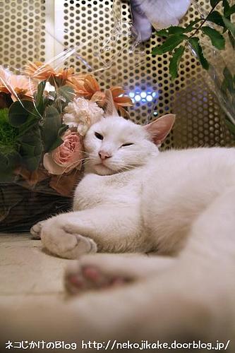 花と一緒のクーやなぁ。