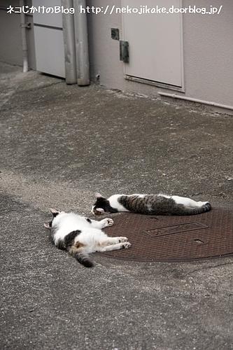 子ネコたちがおやすみ。
