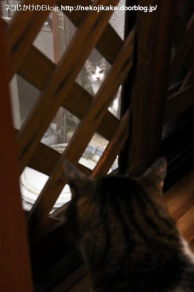 2016091302外の猫、うちの猫。2