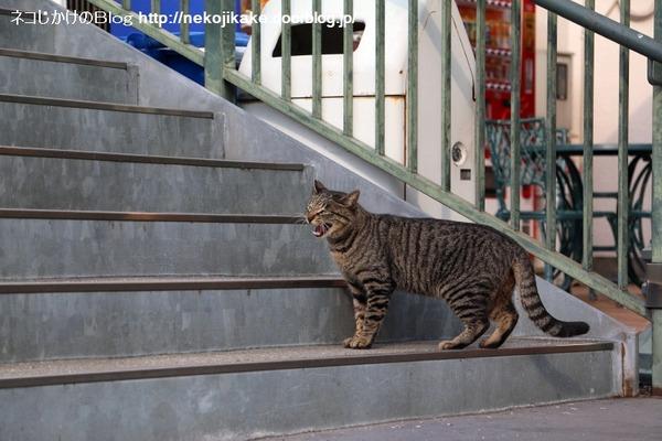 2016022605猫がいるだけで。3