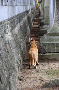 猫かわいがり。その1