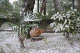 雪の中のネコたち。公園1