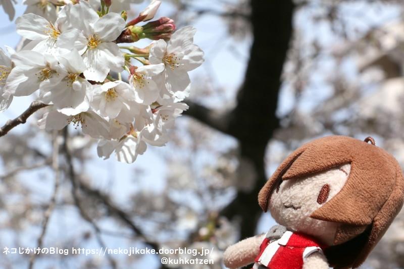 2021032705桜咲く。2