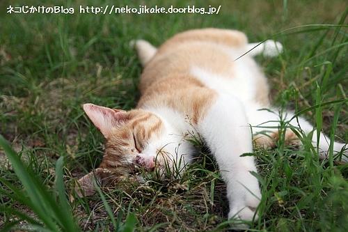 草むら大好き。