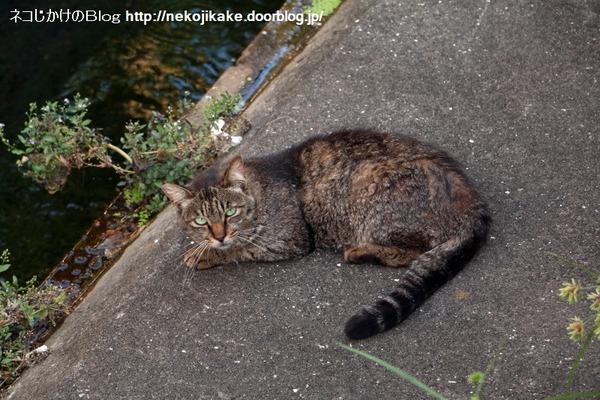 2016070606川沿いでくつろぐ猫たち。1