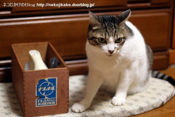 2015012901アイロン台の上の猫。