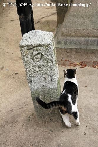 ネコの願い事も聞いてくれるんやろか。