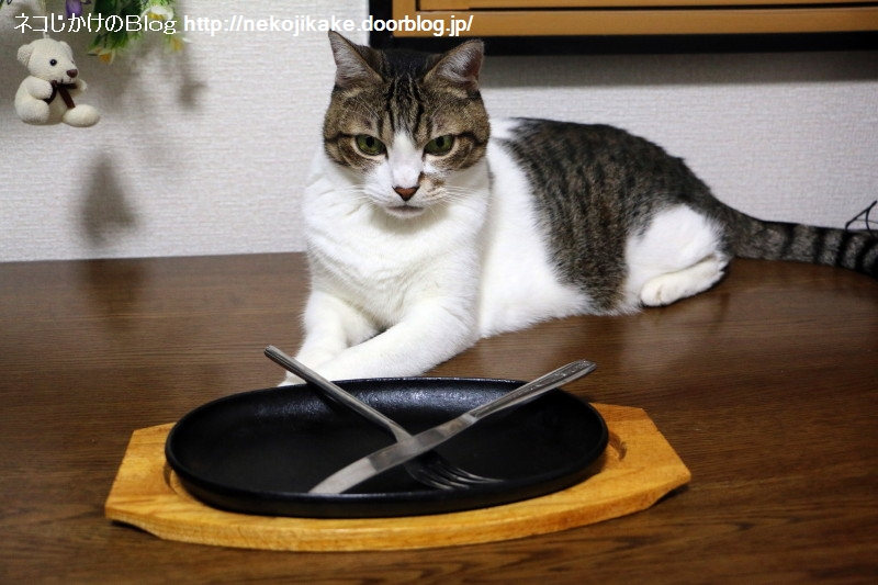 2015073004朝昼晩ごはん全部ステーキ!1