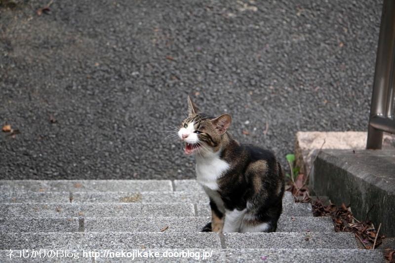 2015090507猫はココにいる。1