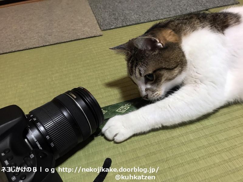 2020062603猫もカメラを見ている。