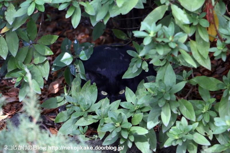 2017031403あなたは黒ネコに見張られています。