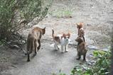母ネコと子ネコたち。