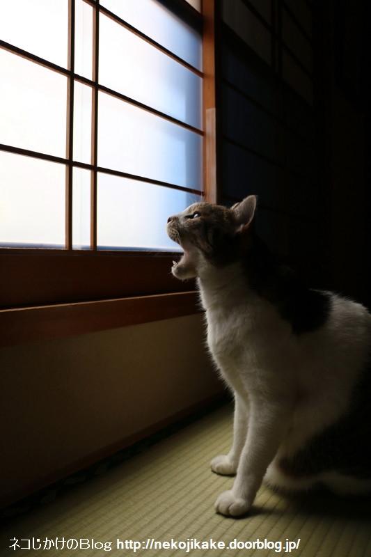 2016060807窓からの光。