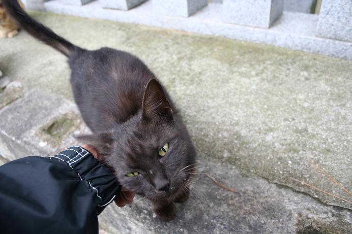 黒ネコの母さん。
