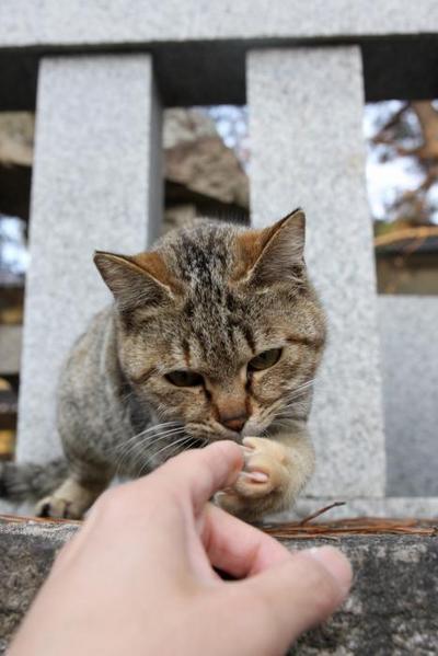 ネコに触れる幸せ。その1 キジトラ子ネコ