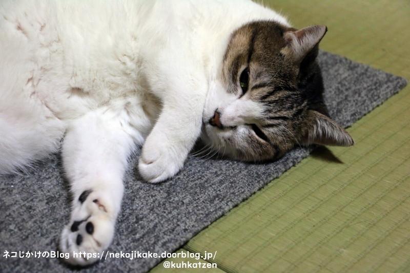 2021091004猫寝入り。2