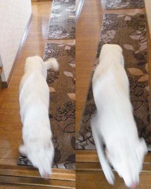 pageyuki走る