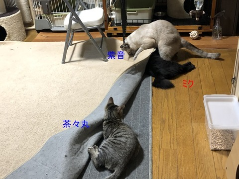 3人さんIMG_2431