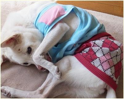 pageyuki_2014102914504624f.jpg