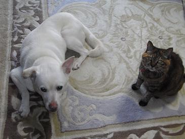 RIMG1892yukiとkoma