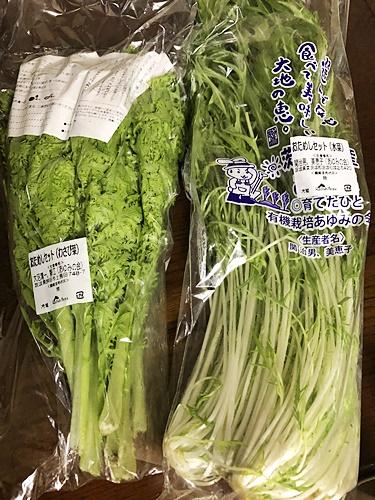 IMG_8974ワサビ菜