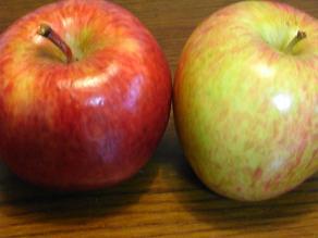 RIMG2114リンゴ