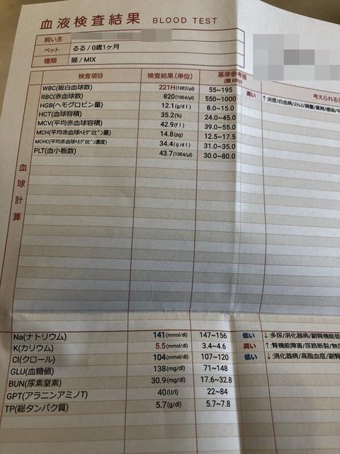 血液検査IMG_5506
