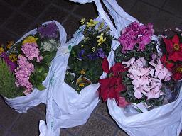 RIMG0268花