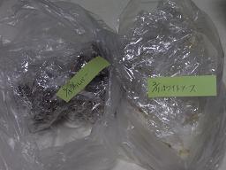 RIMG0938冷凍2