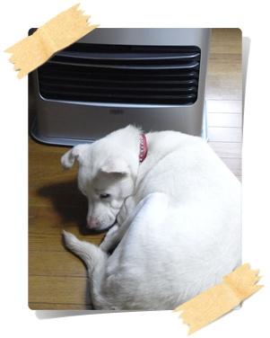 pageyuki寒い~2